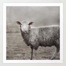The Sheep Art Print