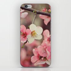Blossoms iPhone & iPod Skin