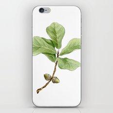 Water Oak iPhone & iPod Skin