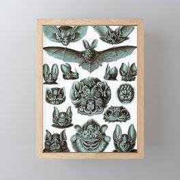 Ernst Haeckel Bats Moonlight Framed Mini Art Print