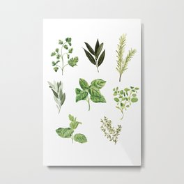Delicate Herb Illustrations Metal Print
