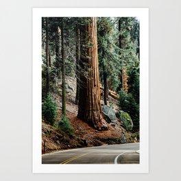giant sequoia i Art Print