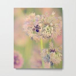 AUGUST LIGHT soft pink pastel golden hour light bee and meadow flower Metal Print