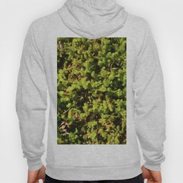 Elevate, Glacier National Park Hoody