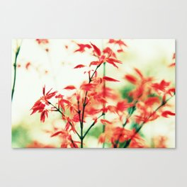 Japanese things 0343 Canvas Print