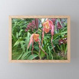 Botanical garden orchid show Framed Mini Art Print