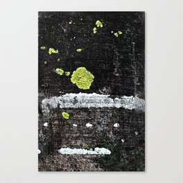 Lichens on a Tree Bark Canvas Print