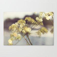 Summer Fields | 03 Canvas Print