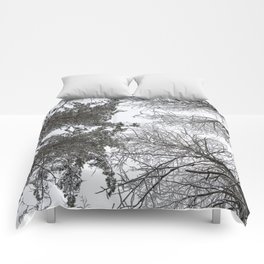 Forest trees in winter. View to the top. Comforters