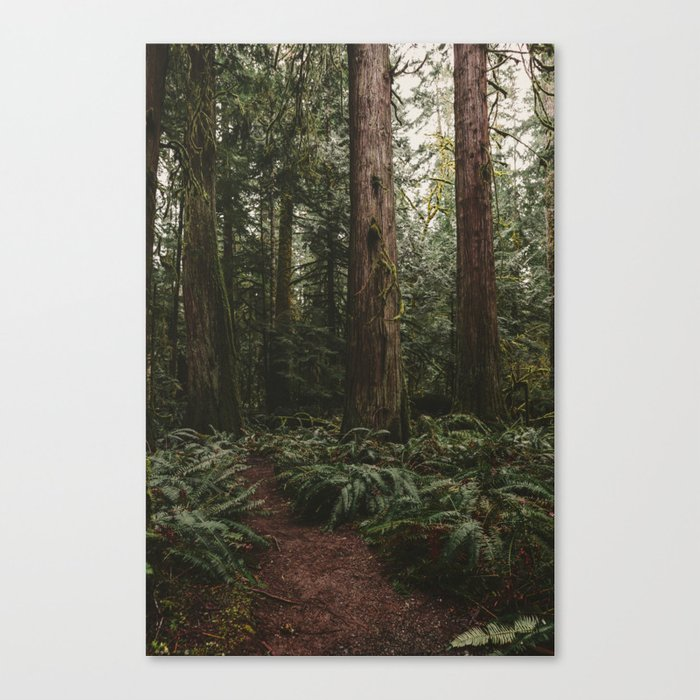 Old growth forest Canvas Print