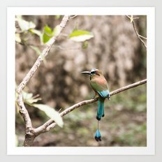 Rainforest Bird Art Print