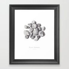 Fossils Framed Art Print