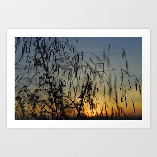 Branches at sunset Art Print