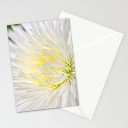 White Marguerite Flower Stationery Cards