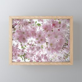 Cherry Blossom Framed Mini Art Print