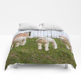 3 Little Lambs Comforters
