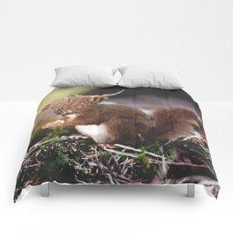 Sqcowirrel Comforters