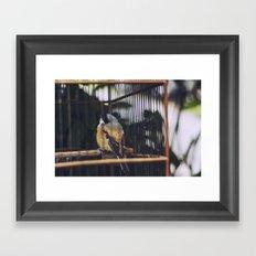 Bird, Bali Framed Art Print