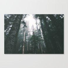 Forest XVIII Canvas Print