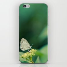 Holly Blue iPhone & iPod Skin