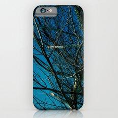 The Norwegian Trees iPhone 6s Slim Case