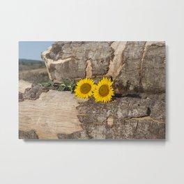 Sunflowers in wood Metal Print