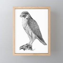 Peregrine Halcon Framed Mini Art Print