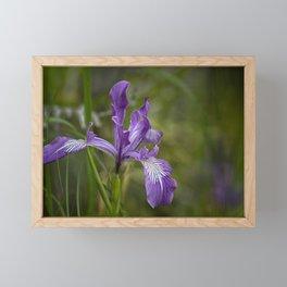 Free Ranging Wild Iris Framed Mini Art Print