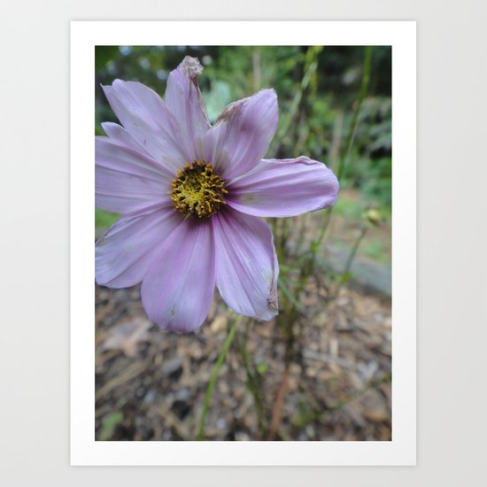 Light Purple Flower Art Print