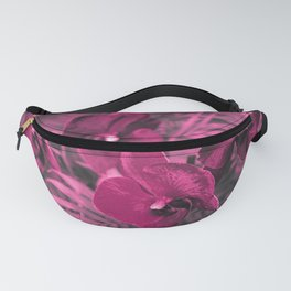Orchid falinopsis . Fanny Pack