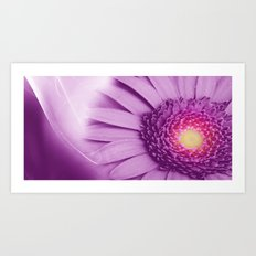 Flower - Gerbera Art Print