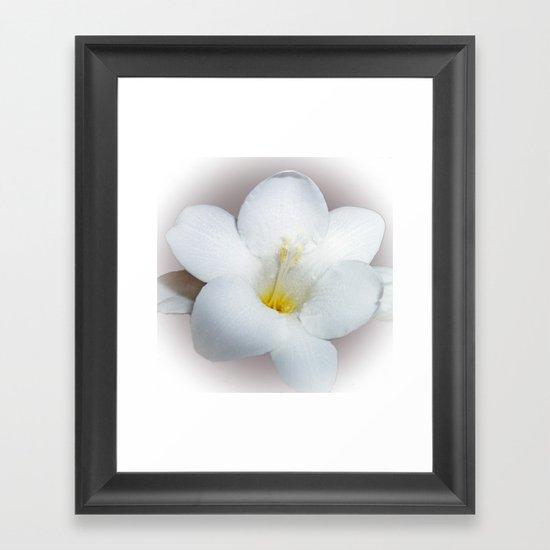Freesia bloom Framed Art Print