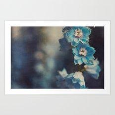 Delphinium  Art Print