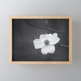 Black and White Dogwood Framed Mini Art Print