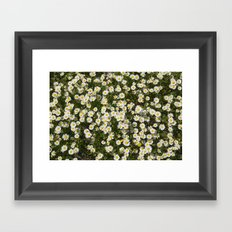 Sea daisies at the mountains Framed Art Print