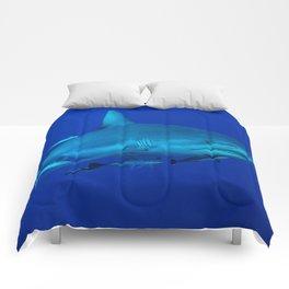 Grey Reef Shark on the Great Barrier Reef Comforters
