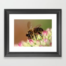 Bee on Flowers. Framed Art Print