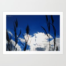 Reeds in the Sun Art Print