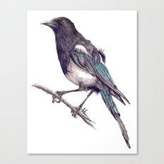 Juvenile Magpie Canvas Print