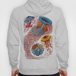 Ernst Haeckel Jellyfish Discomedusae Hoody
