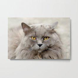 Funny Angry Cat Metal Print