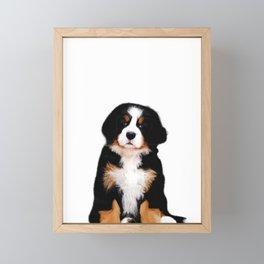 Bernese mountain dog puppy Framed Mini Art Print