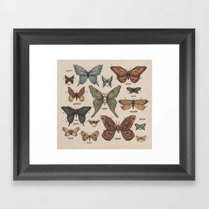 Butterflies and Moth Specimens Gerahmter Kunstdruck