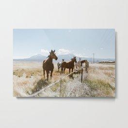 Colorado Wild Horses Metal Print