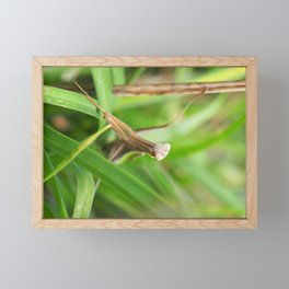 Mantid Framed Mini Art Print