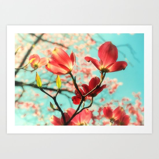 Spring dogwood blossoms Art Print