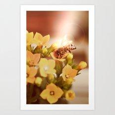 Honey herder 2 Art Print