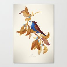 song bird Canvas Print