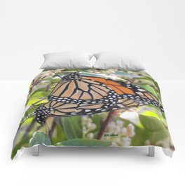 Love in the Air - Monarch Style Comforters