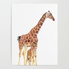 Giraffe Art - A Mother's Love - By Sharon Cummings Poster